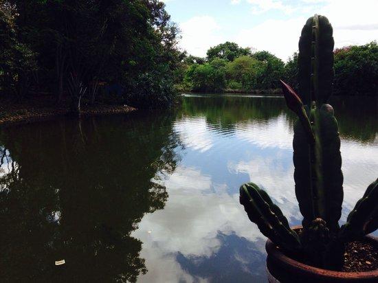 Museu Memorial do Cerrado : The lake