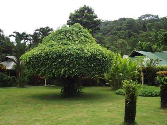 Villas Rio Mar: jardin