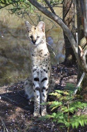 Tenikwa Wildlife Awareness Centre: GT