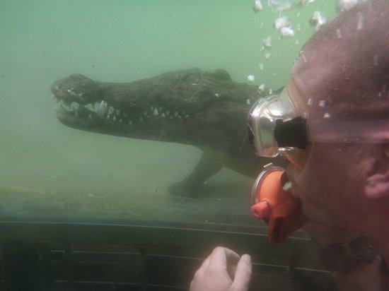 Predatordiving Victoria Falls