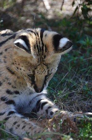 Tenikwa Wildlife Awareness Centre: GT playing