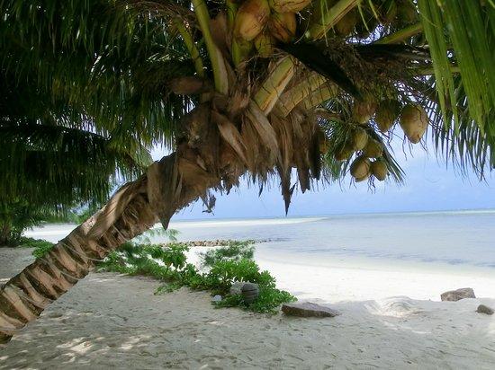 Palm Beach Hotel: Hotelstrand mit Sandbank