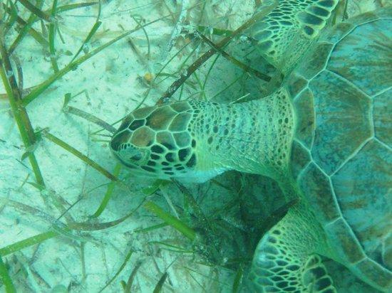 Atlantic Ocean Beach Villas: Turtle Time