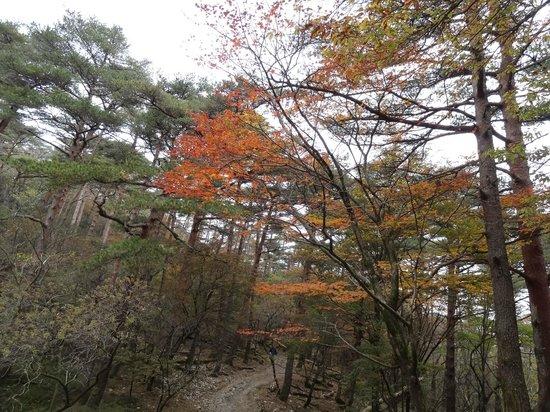 Ebino Kogen : 森の中の遊歩道