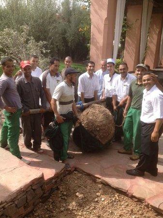 Les Deux Tours : L'équipe des jardiniers ont planté un olivier