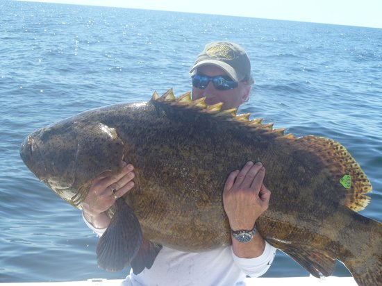 Another Keeper Charters: Goliath Grouper 70lb plus ( tagged and released )