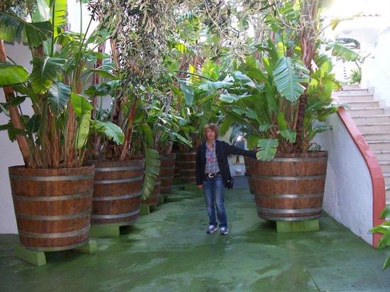 Hotel La Scogliera: Le palme in vaso di fronte alla sala ristorante