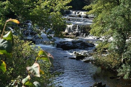 Thornsgill House: Aysgarth Falls,just 5miles downdale. Walk,cycle or drive to see these beautiful Falls&Visitor Ce