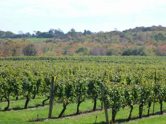 Stonington Vineyards: A view from the deck - overlooking the vineyards