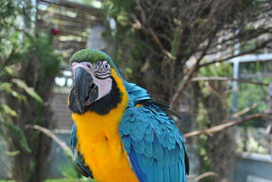 jardin del papagayo photo de jardin del papagayo