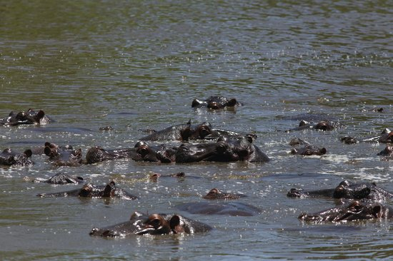 Keekorok Lodge-Sun Africa Hotels: hippo pool