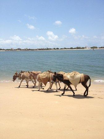 Shella Pwani Guest House : Shela beach