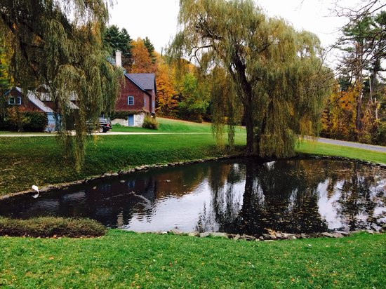 Stonover Farm Bed and Breakfast: The pond