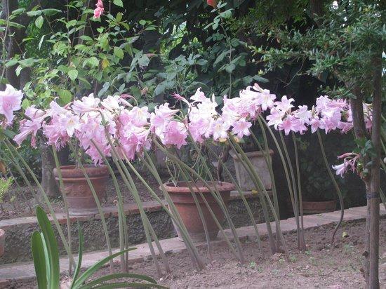 Hotel La Certosella: La fioritura del giardino ai primi di ottobre