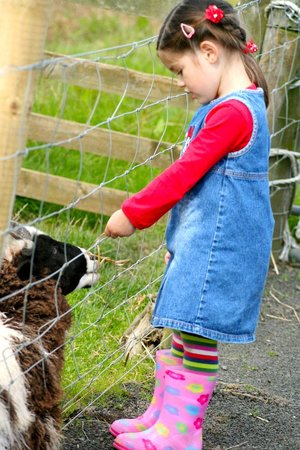 Active Kid Adventure Park: Visiting the Animals