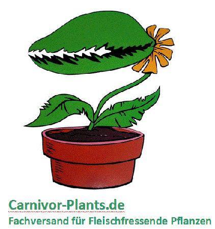 Carnivor-Plants