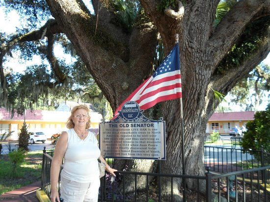 Howard Johnson Inn - Historic ST. Augustine FL: Nancy And The Old Senitor 600 year old Oak