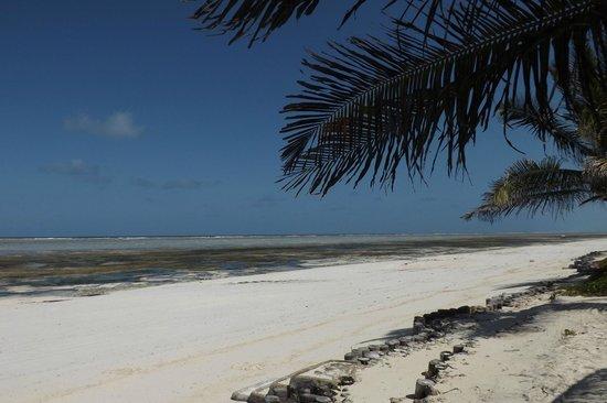 The Palms: Paje beach