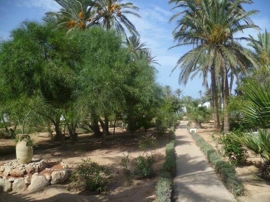 Sangho Club Zarzis: jardin