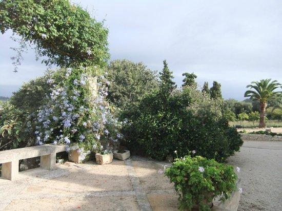Agroturismo sa Rota d'en Palerm: Blütenpracht im Garten