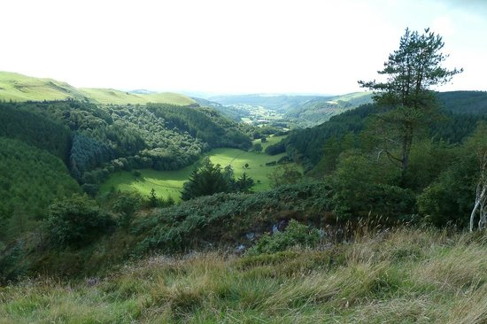 Bwlch Nant yr Arian Forest Visitor Centre: View from the Ridgetop Trail