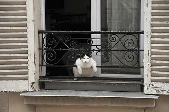 Grand Hotel Francais: Nosy cat from the building across the street