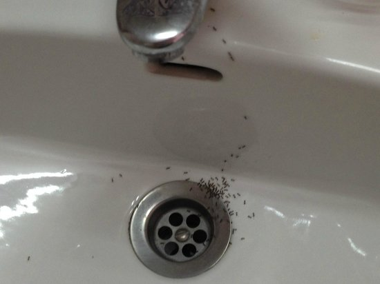Cala Tarida, España: These were the ants in my hotel room bathroom sink