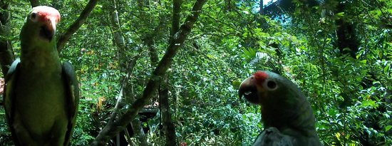 Cashew Hill Jungle Cottages: Colorful birds everywhere