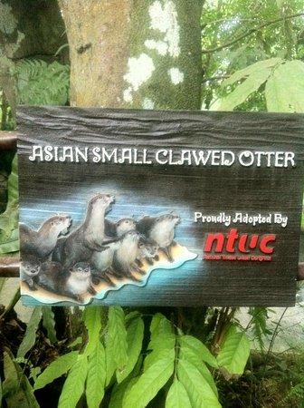 Singapore Zoo: MUY BELLOS