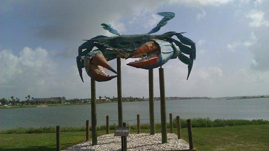 Rockport Beach : Crab at entrance