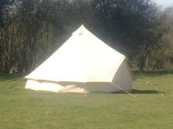 Welsummer Camping Photo