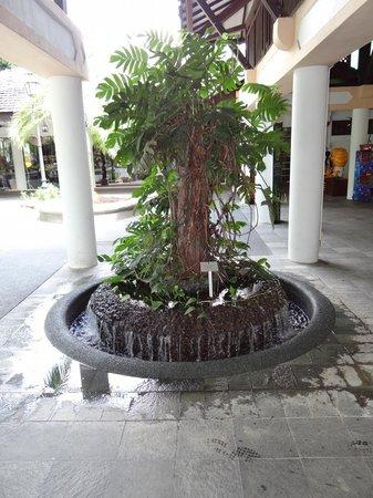 สวนพฤกษชาติสิงคโปร์: Singapore Botanic Gardens