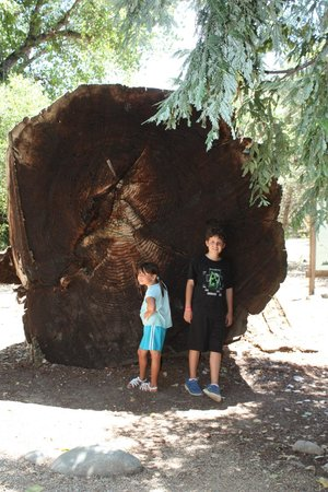 Turtle Bay Exploration Park : Redwood Log outside at Turtle Bay