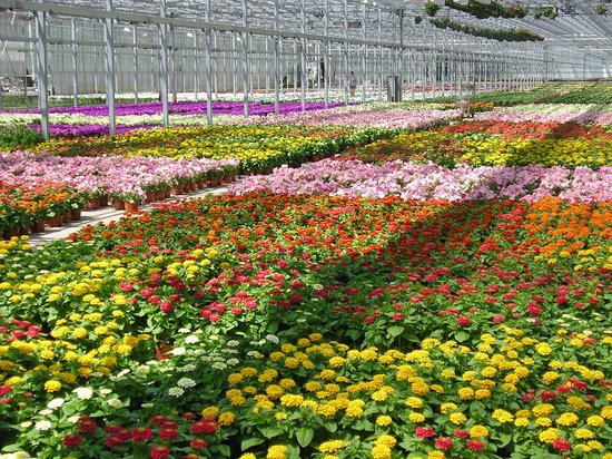 Bergen's Greenhouses, Inc