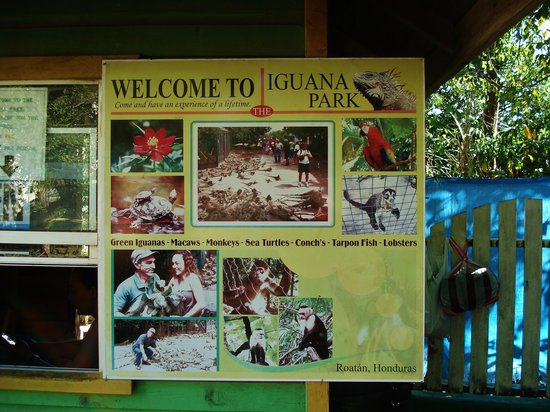 Arch's Iguana  and Marine Park: The Entrance