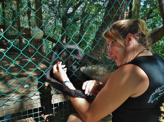 Arch's Iguana and Marine Park: Monkey Love