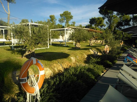 Hotel Coronado Thalasso & Spa: Garten hintern Pool