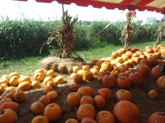 Hunsader Farms: Pumpkin Patch