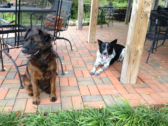 Fincastle Vineyard & Winery: Our dog hanging out with Max (black and white one) that lives on the property