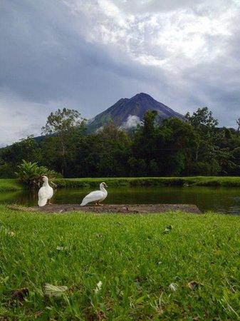 Arenal Paraiso Hotel Resort & Spa: La vista desde el laguito del hotel, ya se comenzaba a despejar el día!