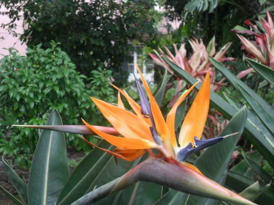 Presidential Palace Garden: one of many exotic flowers