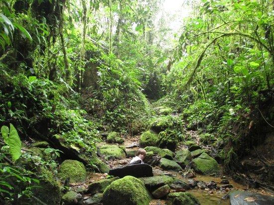 Huasquila Amazon Lodge: Hiking to waterfalls