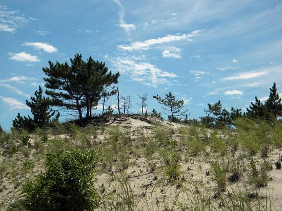 dunes - Picture of Cape Henlopen State Park, Lewes ...