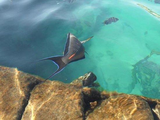 Continental Garden Reef Resort : Сноркелинг - основной плюс отеля