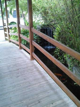 Toby's Resort: Small bridge with fish