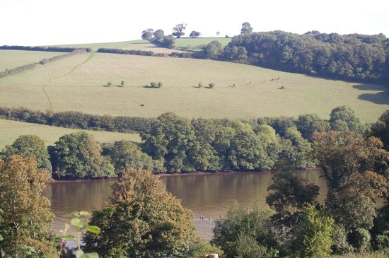 Sharpham Wine and Cheese: Some wild swimmers spotted in the River Dart from Sharpham Wine & Cheese