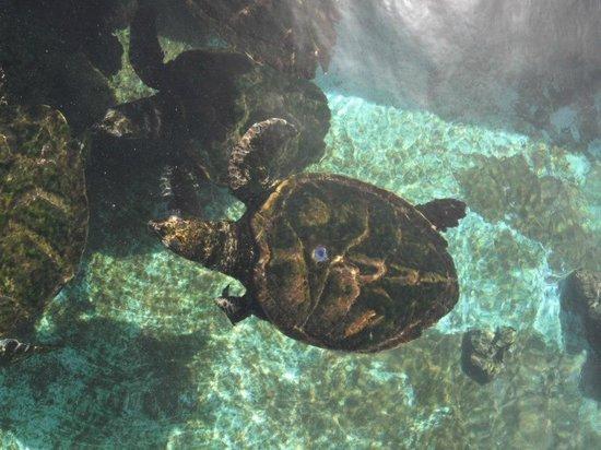 Underwater Observatory Marine Park : Черепахи в аквариуме