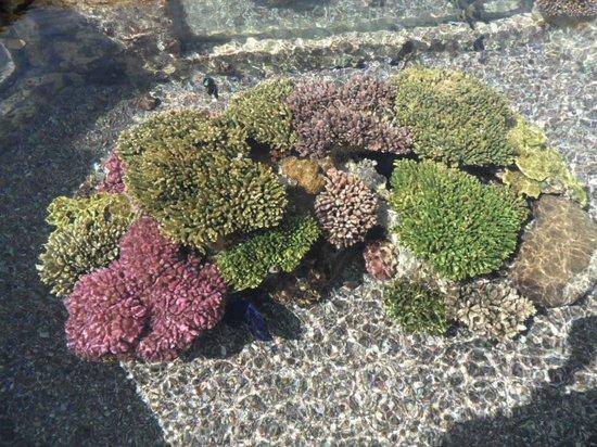Underwater Observatory Marine Park : Кораллы