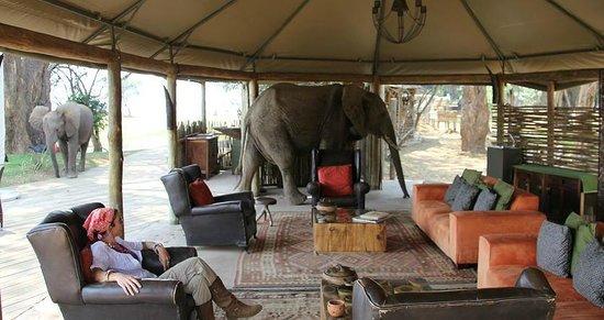 Wilderness Safaris Ruckomechi Camp: elephant in the bar