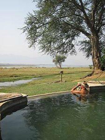 Wilderness Safaris Ruckomechi Camp: pool